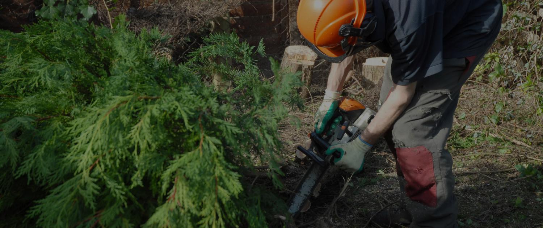 Tree Surgery Slider